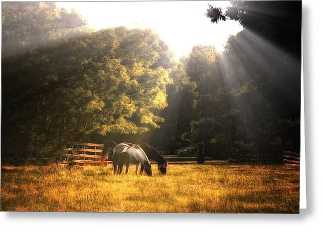 Greeting Card featuring the photograph Out To Pasture by Mark Fuller