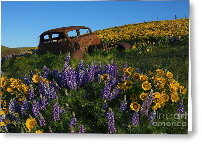 Out To Pasture Greeting Card by Mike Dawson