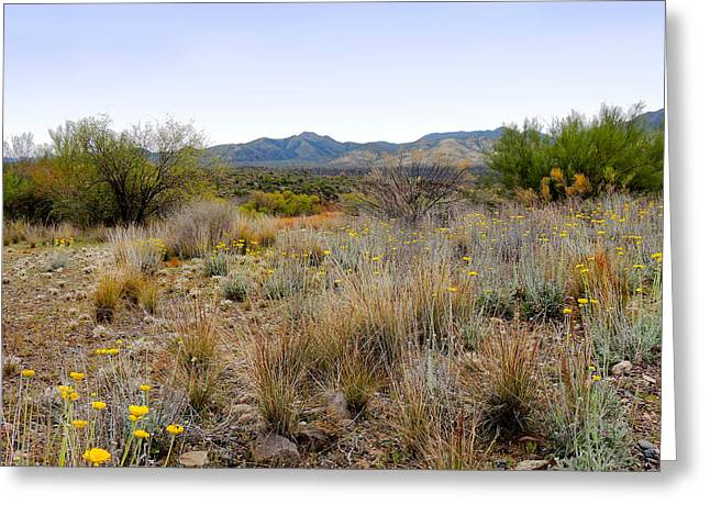 Outback Arizona Greeting Card by Gordon Beck