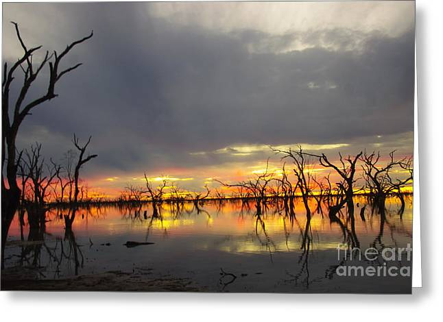 Outback Sunset Greeting Card by Blair Stuart