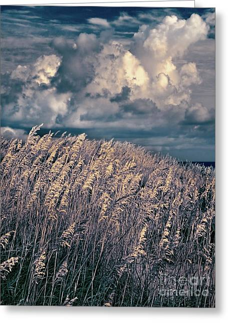Outer Banks - Sea Oats Swaying In A Storm Fx Greeting Card by Dan Carmichael