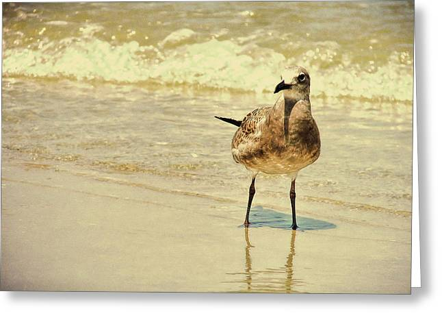 Outerbanks Gull Greeting Card by JAMART Photography