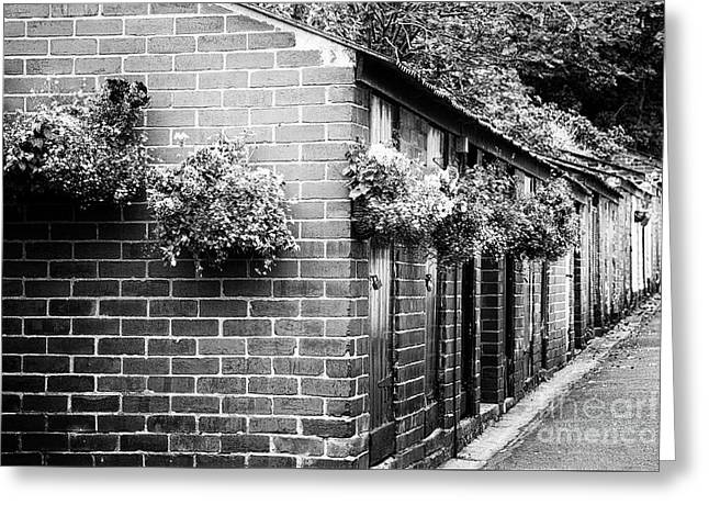 Outhouses All In A Row - Black And White Greeting Card