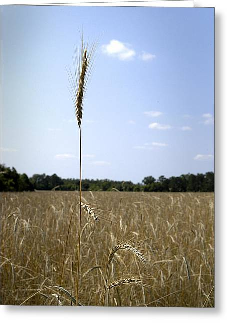 Outstanding In Its Field. Greeting Card