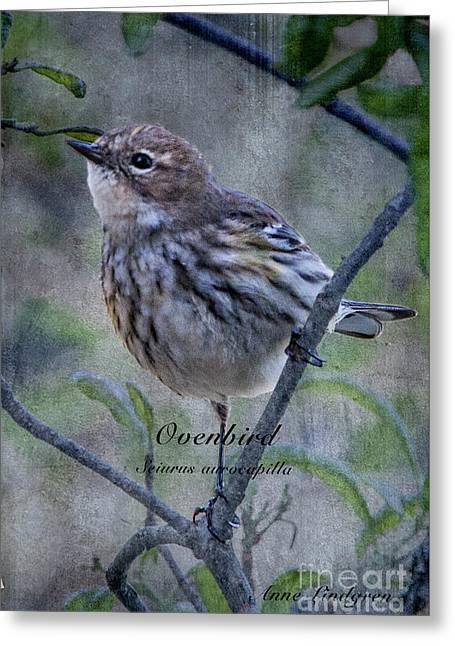 Ovenbird Greeting Card by Anne Lindgren