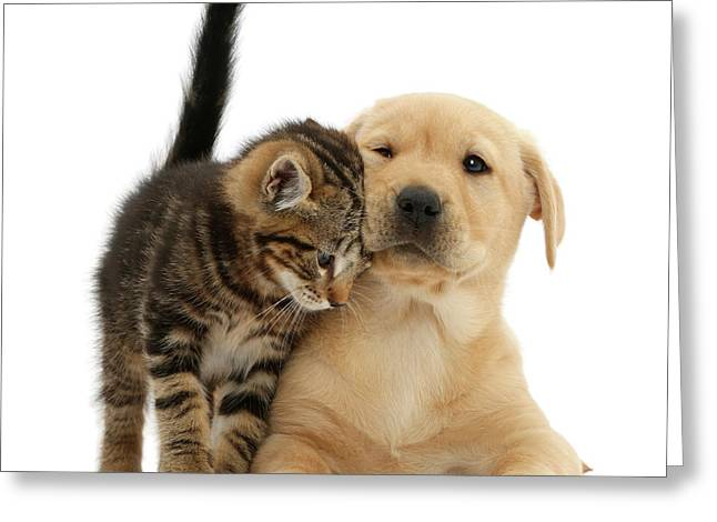 Over Friendly Kitten Greeting Card