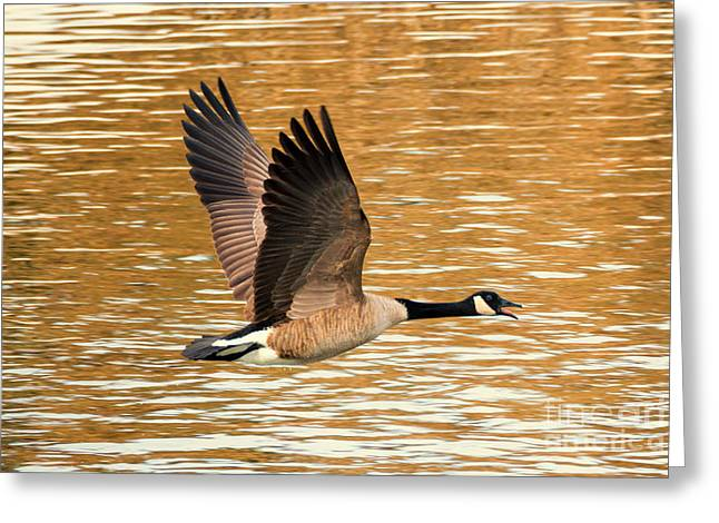 Over Golden Waters Greeting Card by Mike Dawson