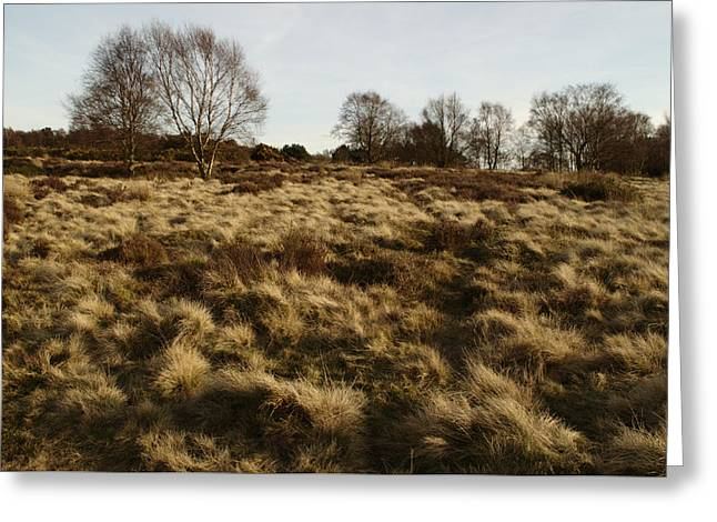 Over The Heath Greeting Card by Adrian Wale