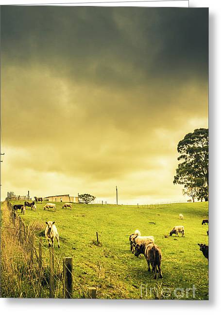 Overcast Sky Above Herd Of Cows On Pasture Greeting Card by Jorgo Photography - Wall Art Gallery