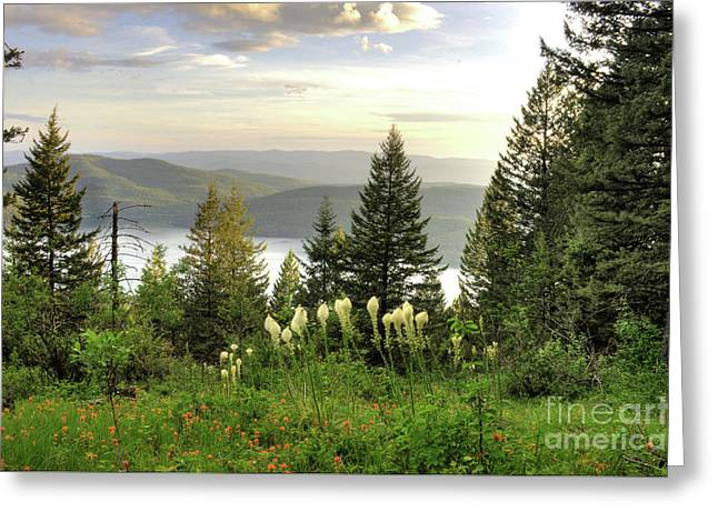 Overlook Greeting Card by Dave Hampton Photography