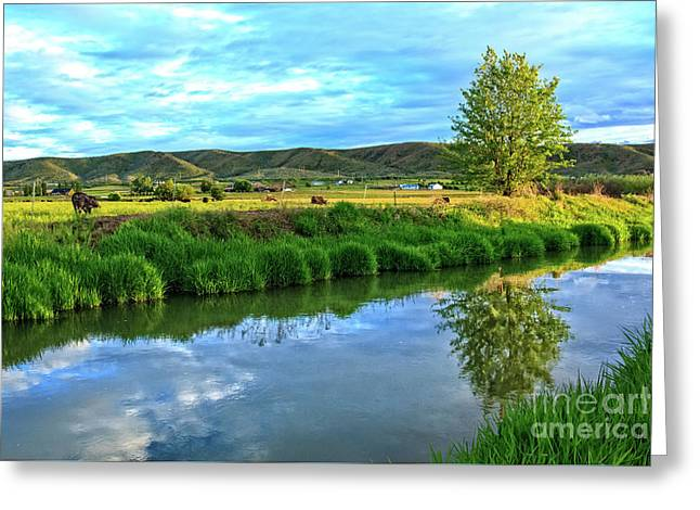 Overlooking Irrigation Canal Greeting Card
