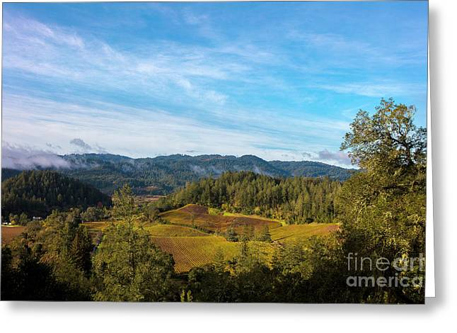Overlooking The Vineyard Greeting Card by Jon Neidert