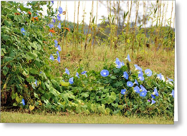 Overtaking Beauty Greeting Card by Jan Amiss Photography
