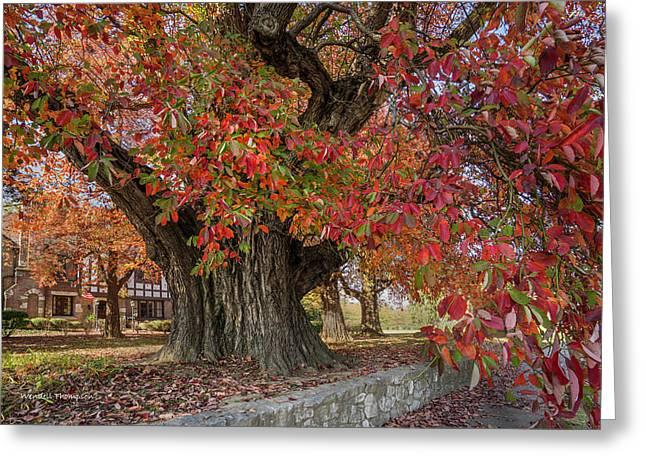 Owensboro Sassafras  Tree Greeting Card by Wendell Thompson