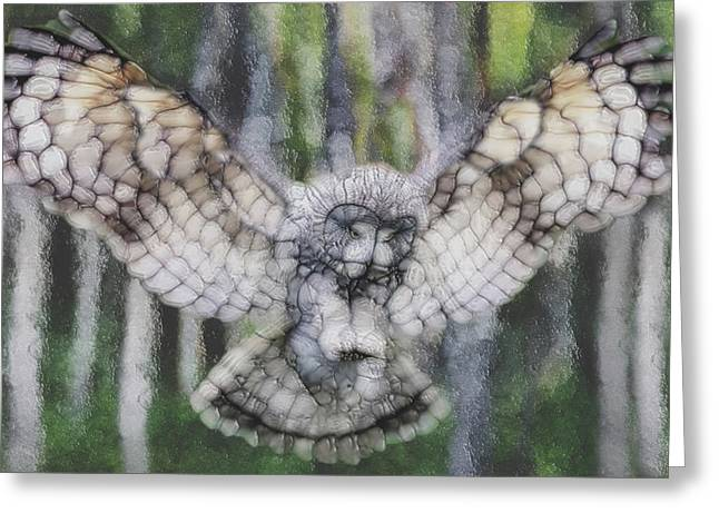 Owl 3 Greeting Card
