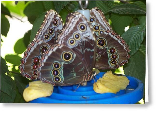 Owl Butterflies Greeting Card by Rosanne Bartlett