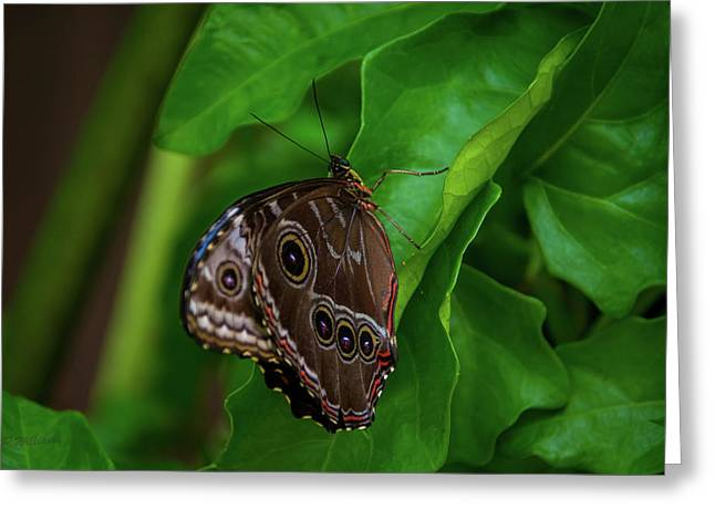 Owl Butterfly Greeting Card by Pamela Williams