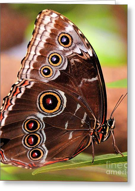 Owl Butterfly Portrait Greeting Card