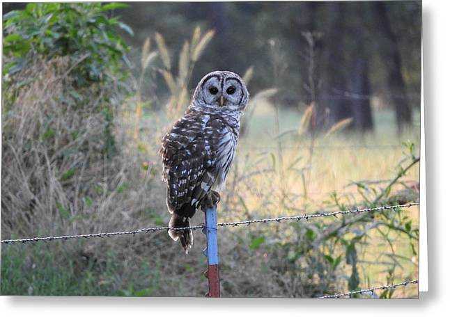 Owl Cherish This Moment Forever Greeting Card by Roxanne Raber