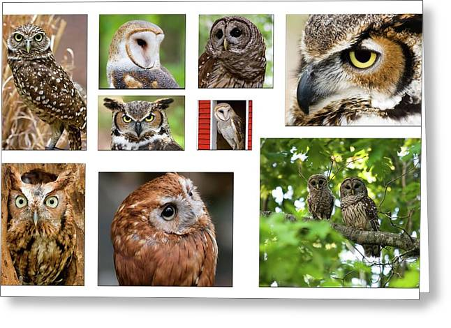 Owl Collage Greeting Card