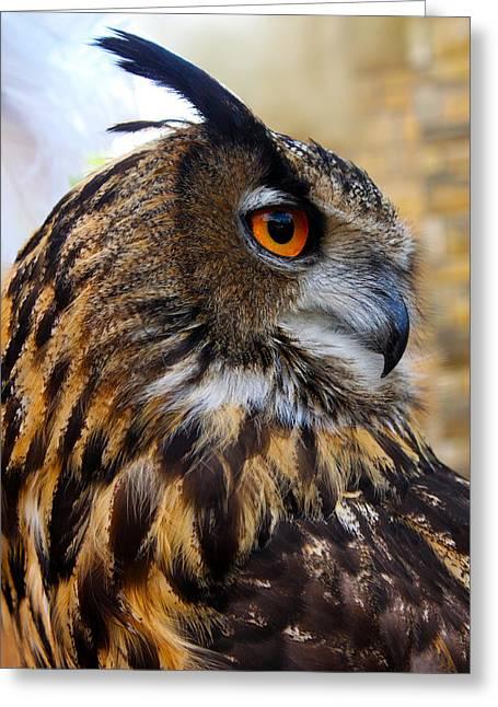 Owl-cry Greeting Card