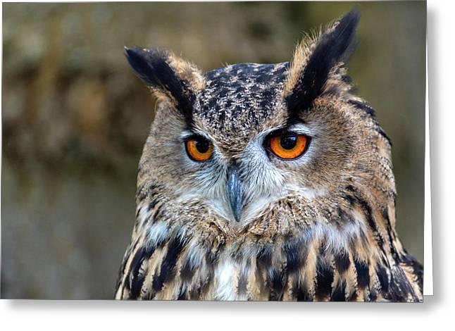 Greeting Card featuring the photograph Owl Eyes by Cliff Norton