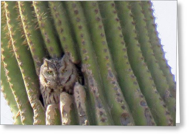 Owl In Cactus Burrow Greeting Card