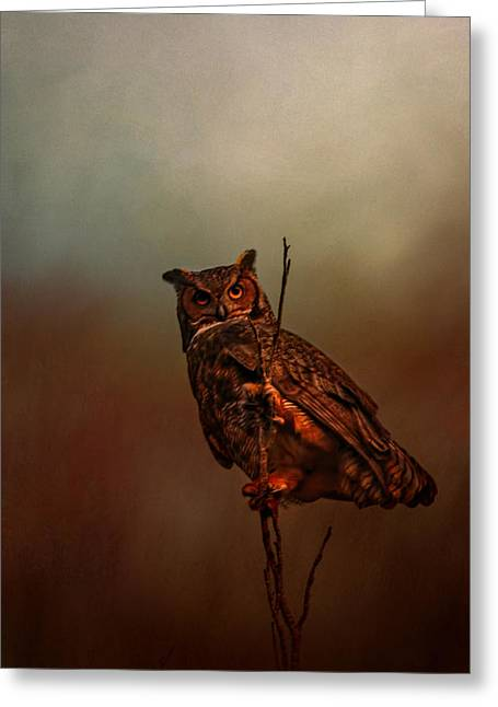 Owl In The Marsh Greeting Card