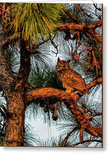 Owl In The Very Last Sunset Light Greeting Card