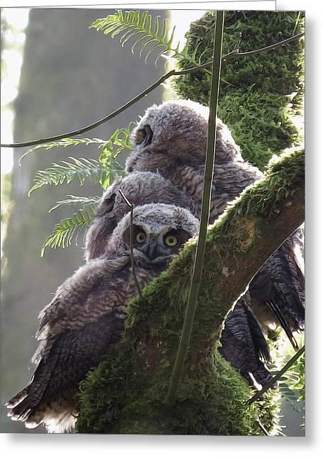 Owl Morning Greeting Card