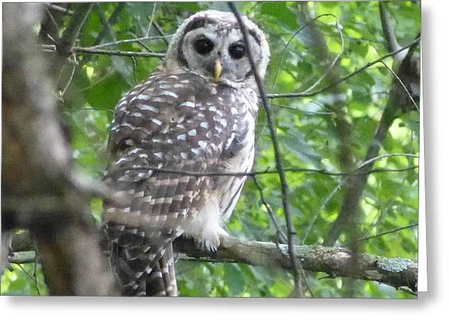 Owl On A Limb Greeting Card by Donald C Morgan
