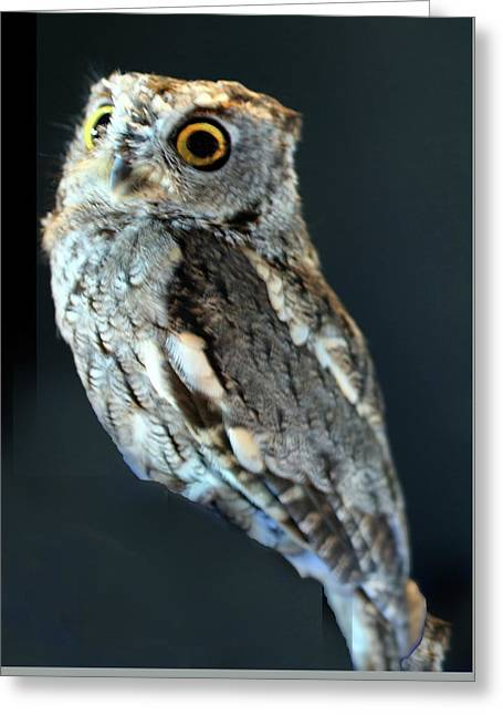 Owl On Black Greeting Card by Michael Riley