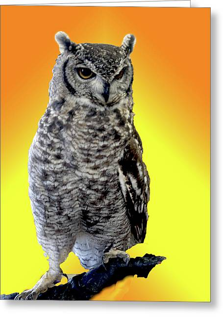 Owl On Branch Greeting Card by Michael Riley