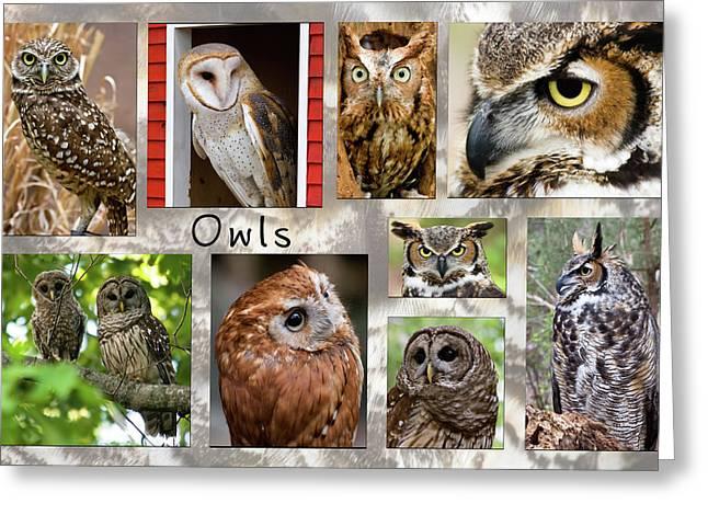 Owl Photomontage Greeting Card