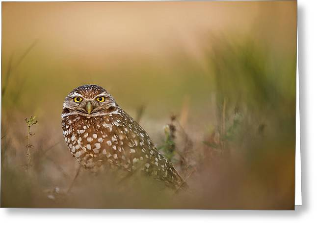 Owl Greeting Card by Ray Hennessy