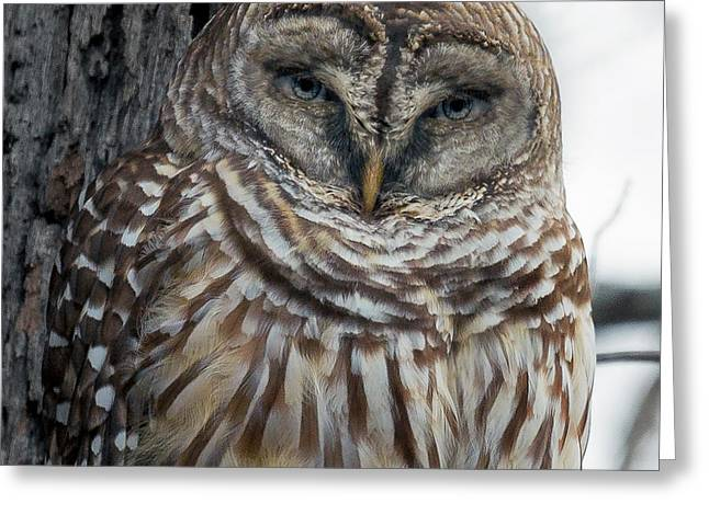Owl See You Soon Greeting Card