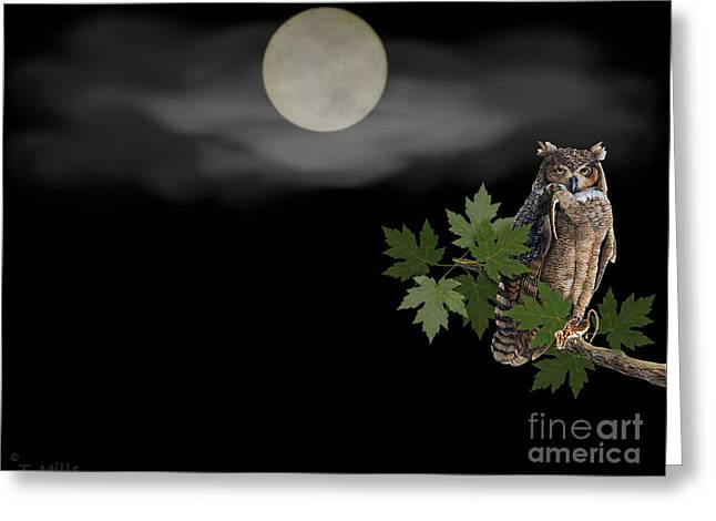 Owl Greeting Card by Terri Mills