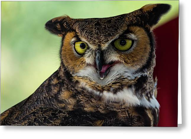 Owl Tongue Greeting Card