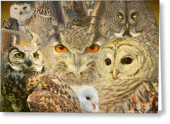 Owl You Need Is Love Greeting Card by Heather King