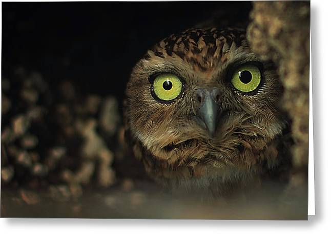 Owl Greeting Card by Zoltan Toth