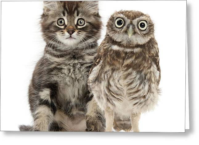 Owling And Yowling Greeting Card