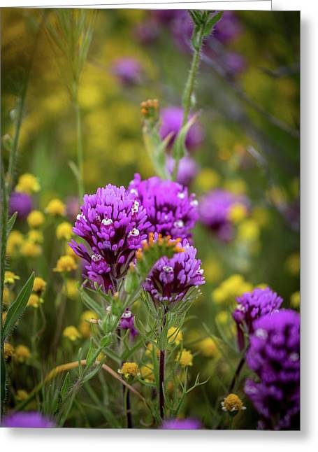 Greeting Card featuring the photograph Owl's Clover by Peter Tellone