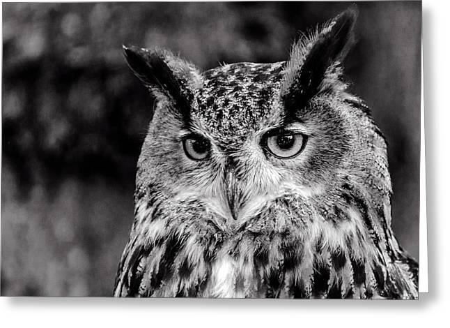 Greeting Card featuring the photograph Owls Eyes  by Cliff Norton