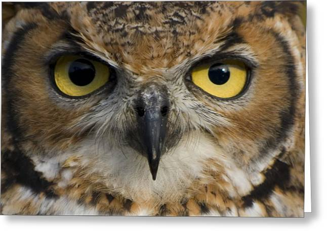 Owls Eyes Greeting Card by Pixie Copley