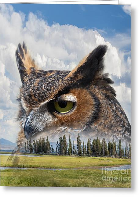 Owl's Rest Greeting Card
