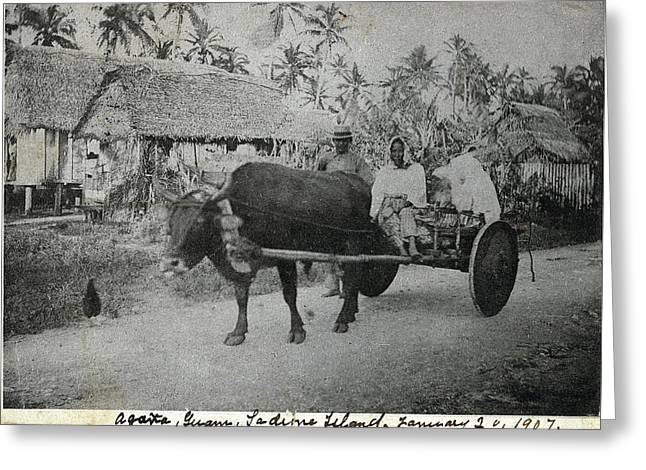 Greeting Card featuring the photograph Ox Cart Guam 1907 by eGuam Photo