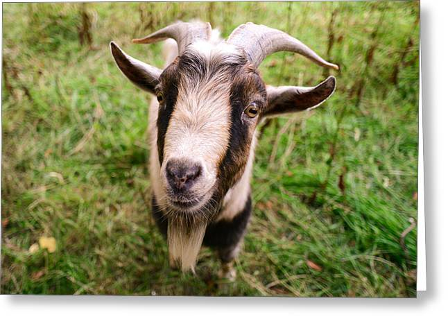 Greeting Card featuring the photograph Oxford Goat by Alex Blondeau