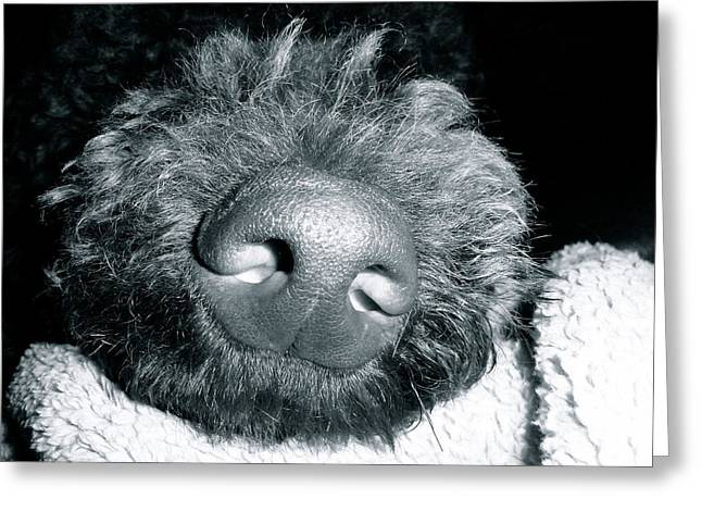 Bodhi Nose Greeting Card