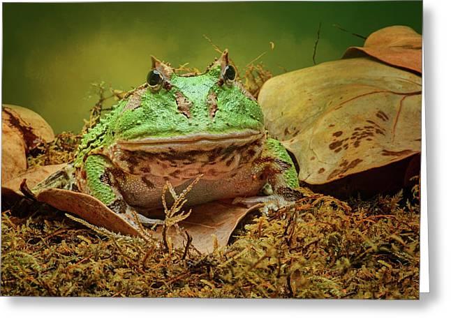 Pac Man - Frog Greeting Card by Nikolyn McDonald