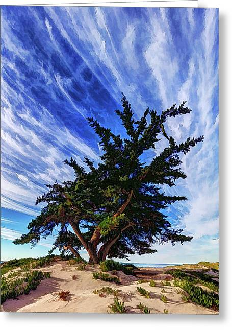Greeting Card featuring the photograph Pacific Beach Juniper by ABeautifulSky Photography